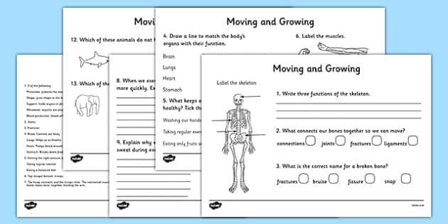 Ks2 Science Movement Worksheets Movement Skeleton