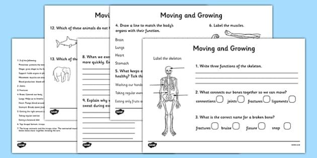 KS2 Science Movement Worksheets, Movement, Skeleton, Muscles ...