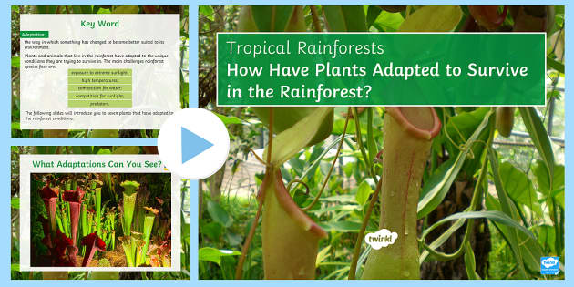 adaptive features of plants in rainforests Life in the tropics jaguars have several adaptations that allow them to be one of the most successful creatures in the tropical rainforests plants that do.