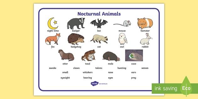 Free Nocturnal Animals Word Mat Animals Nocturnal