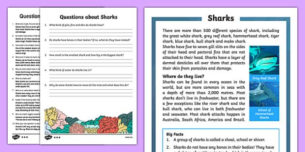 Sharks Reading Comprehension Activity