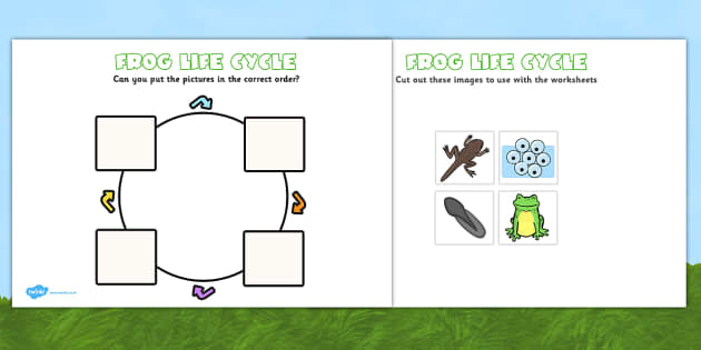 photo about Frog Life Cycle Printable called Frog Existence Cycle Worksheets (Minibeasts)