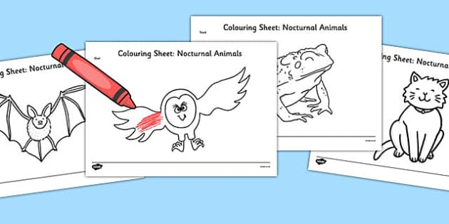 Nocturnal Animals Colouring Pages