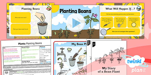 science plants planting beans year 1 lesson pack 1. Black Bedroom Furniture Sets. Home Design Ideas