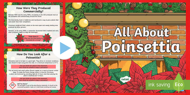 Ks2 Poinsettia Information Powerpoint Teacher Made