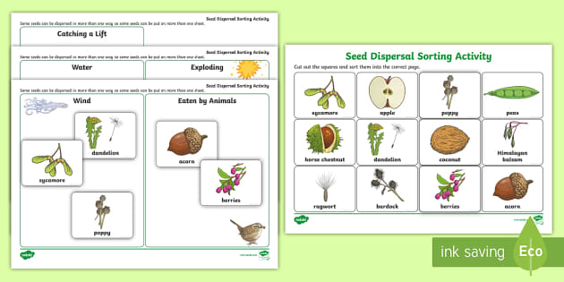 Seed Growth Worksheet - seed growth, seed growth observation