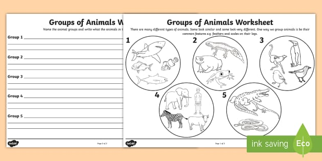 animal groups worksheet animals living things classifying animals. Black Bedroom Furniture Sets. Home Design Ideas