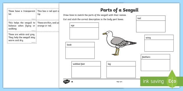 t-sc-262-parts-of-a-seagull-differentiated-activity-sheet_ver_2 Australian Animals Worksheet Ks on australian animals chart, australian animals book, endangered animals worksheet, australian animals lesson plan, australian animals names, australian animal coloring sheet, australian animals coloring pages, desert animals worksheet, sea animals worksheet, spanish animals worksheet, french animals worksheet, forest animals worksheet, australian animals list, farm animals worksheet, rainforest animals worksheet, nocturnal animals worksheet, australian australian animals, australian outback animals, australian animals drawings, zoo animals worksheet,