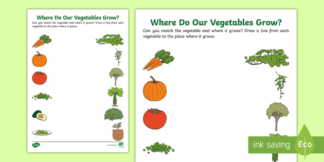 Where Do Our Vegetables Grow? Worksheet - farming, growing