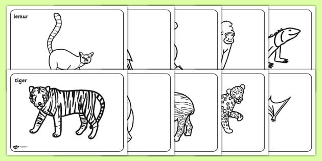 FREE! - Rainforest Animals Colouring Pages (teacher made)