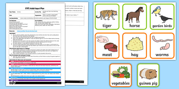 Eyfs Animals And Their Food Adult Input Plan And Resource