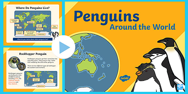 Ks1 Penguins Around The World Powerpoint Teacher Made Do i care about my golf game? ks1 penguins around the world