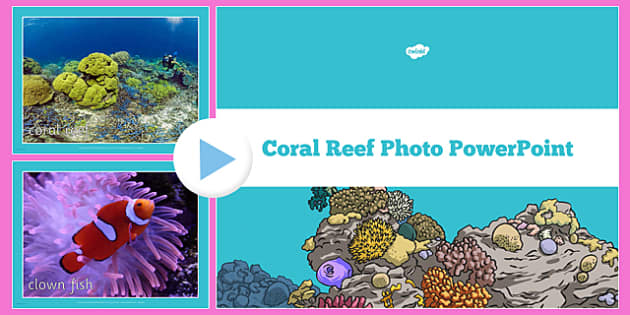 renewable resource coral reef Sustainable use of natural resources search  describe the difference between renewable and non-renewable resources  discuss three importance of coral reefs in.