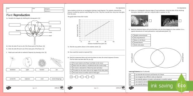ks3 plant reproduction homework worksheet activity sheet. Black Bedroom Furniture Sets. Home Design Ideas