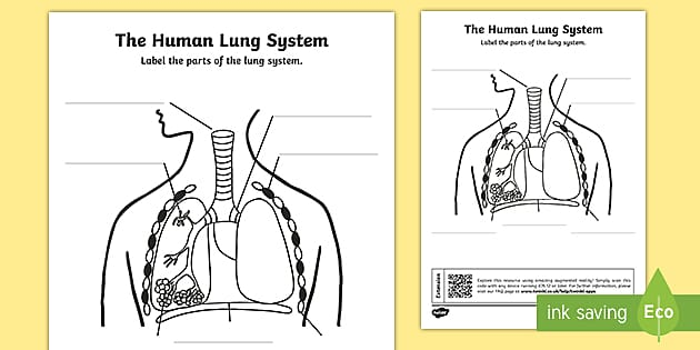 Ks2 The Human Lung System Qr Labelling Activity