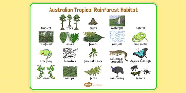 Australian Tropical Rainforest Habitat Word Mat