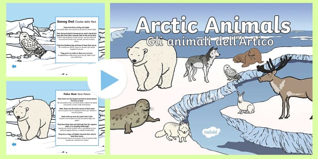 Italian English Animsld: Winter Arctic Animals Habitat PowerPoint English/Italian