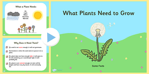 What Plants Need to Grow PowerPoint - plants, living things