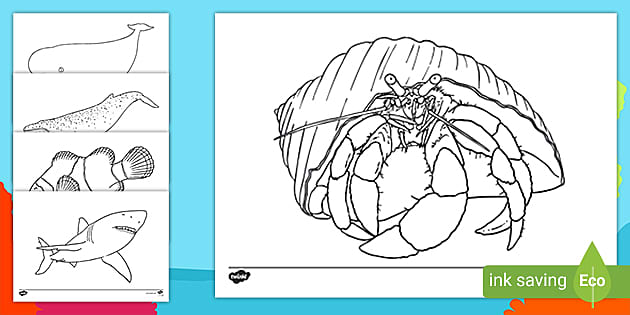 Free Under The Sea Creatures Colouring Sheets Primary Resources