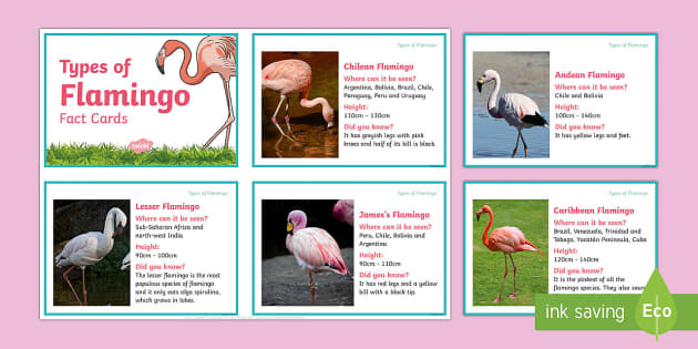 fun facts and trivia about flamingos the spruce - 630×315