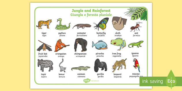 Italian English Animsld: Jungle And Rainforest Word Mat English/Italian