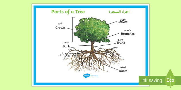 Parts Of A Tree Poster Arabic  English