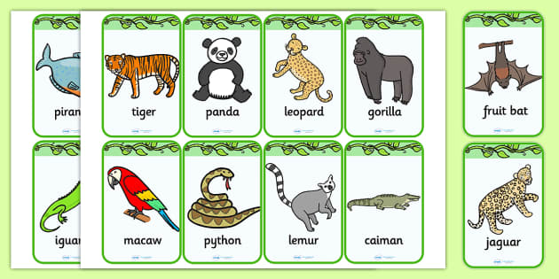 Jungle Flashcards Jungle Animal Geography Flash Cards