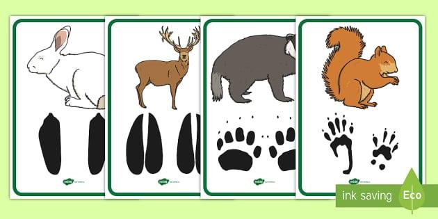 Amprentele Aimalelor Sălbatice Planșe Animale Sălbatice