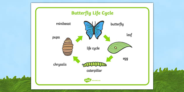 Free Butterfly Life Cycle Word Mat Minibeasts Word Mat Chrysalis