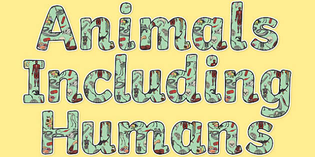 Image result for animals including humans clipart