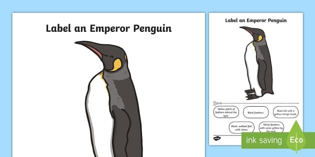 Label An Emperor Penguin Worksheet    Worksheet