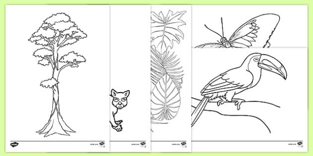 - Rainforest Themed Colouring Sheets (teacher Made)