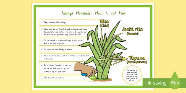 Tikanga Harakeke - How To Cut Flax A4 Display Poster   English
