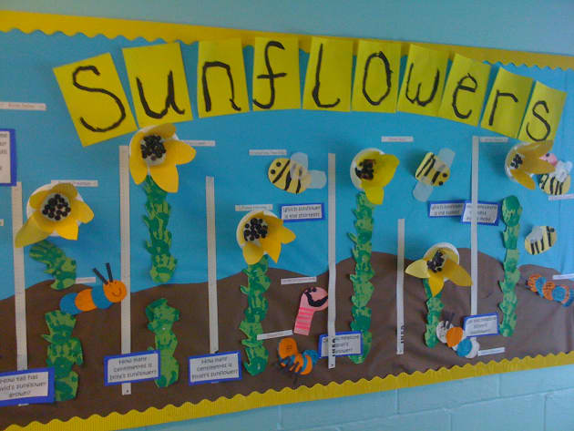 Classroom Display Ideas Ks1 ~ Sunflower display classroom flowers growing