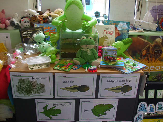 Frog Display, classroom displays, class display, animal, pets, pet, frog, tadpole, frogspawn, log, Early Years (EYFS), KS1 & KS2 Primary Teaching Resources
