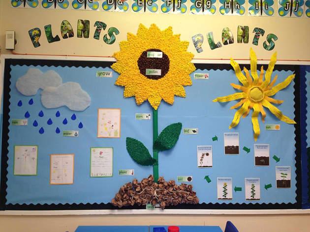 Plants  Pollen  Seeds  Grow  Flower  Display  Classroom