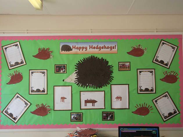 Animals Happy Hedgehogs Hedgehogs