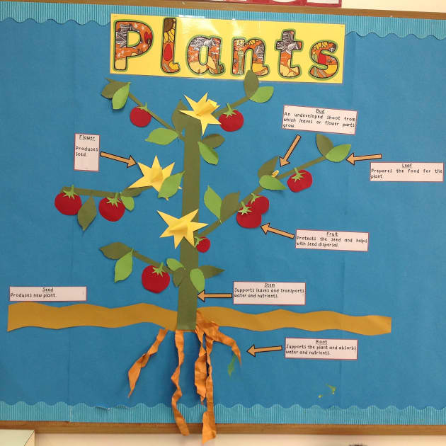 Modern Language Classroom Displays : Parts of a plant display
