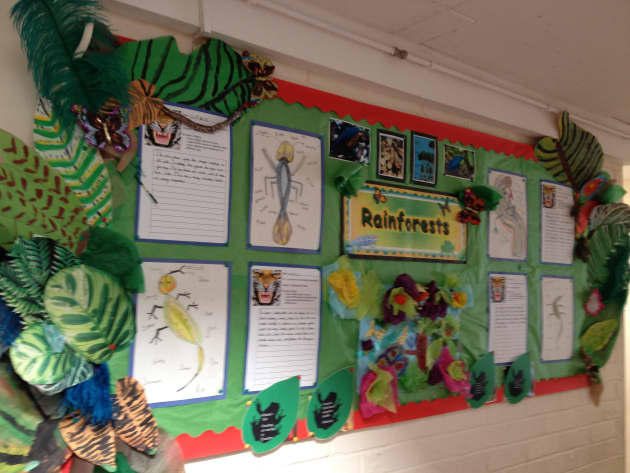 Rainforests Display classroom displays animals forest