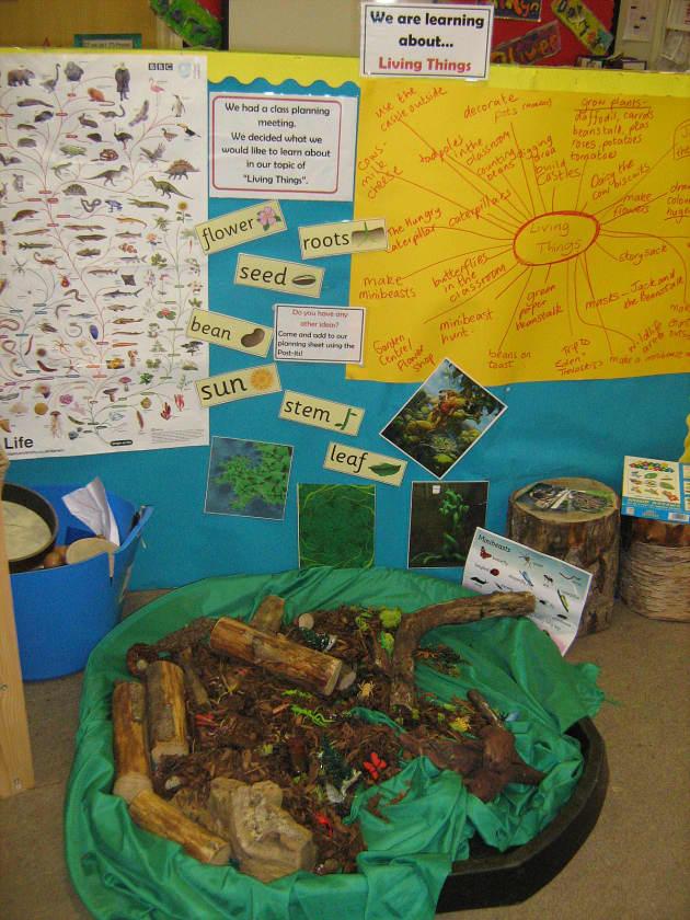 Living Things Display  Classroom Displays  Flowers  Minibeasts