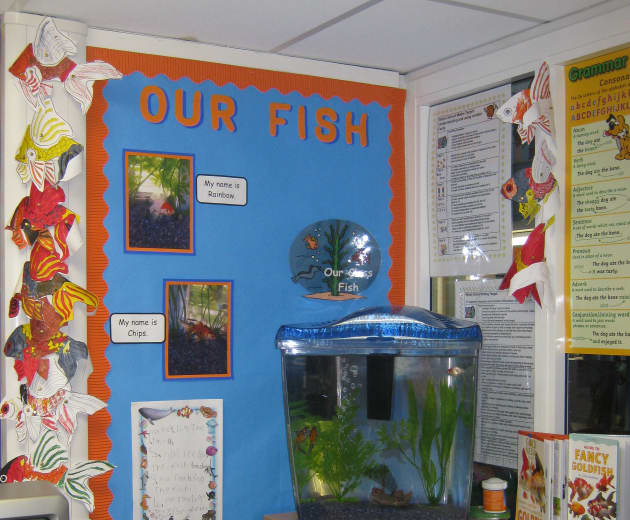 Our Fish Display Classroom Displays Underwater Fish Tank